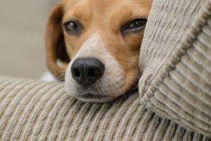 materiałowa buda dla psów