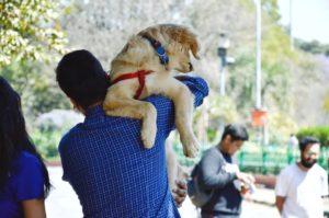 Twój pies lubi szelki firmy easy walk