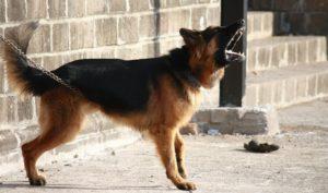 uciążliwie szczekający pies