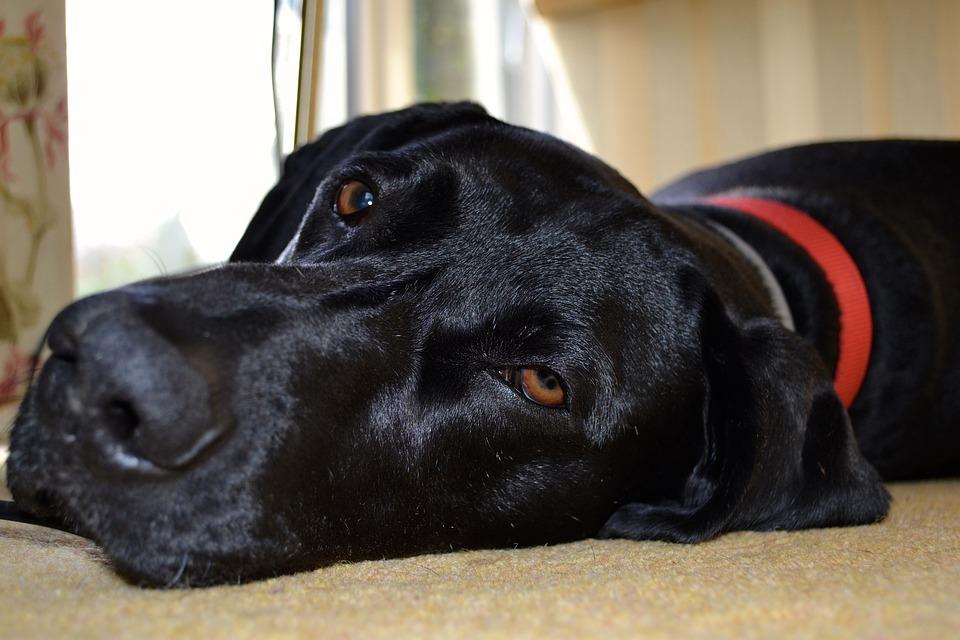 psie legowisko - okazja